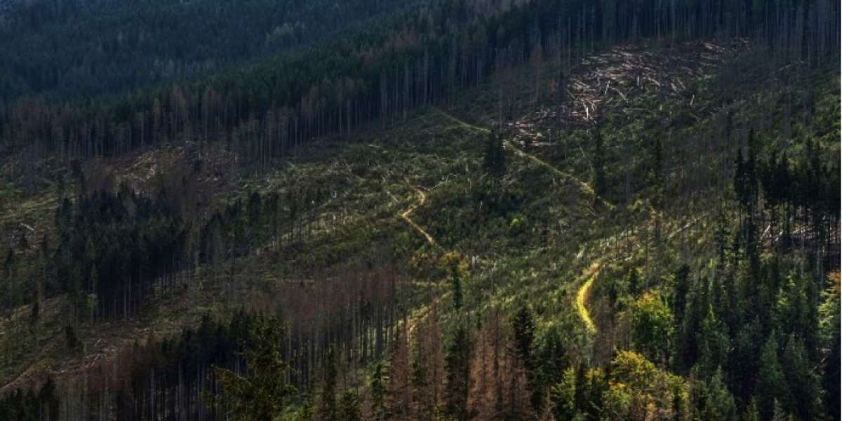Global Deforestation Exploration : 1990 to 2016
